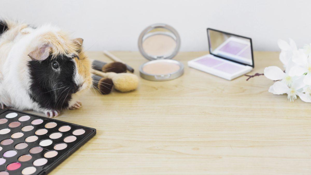 4 Alasan Pentingnya Memilih Makeup Animal Friendly